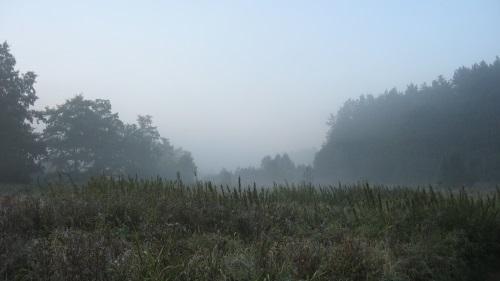 wilkomija-bagna