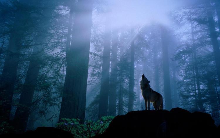 Wilk z Bodzentyna